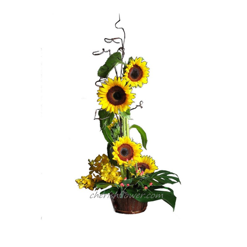 FA19 - Sunflowers Arg
