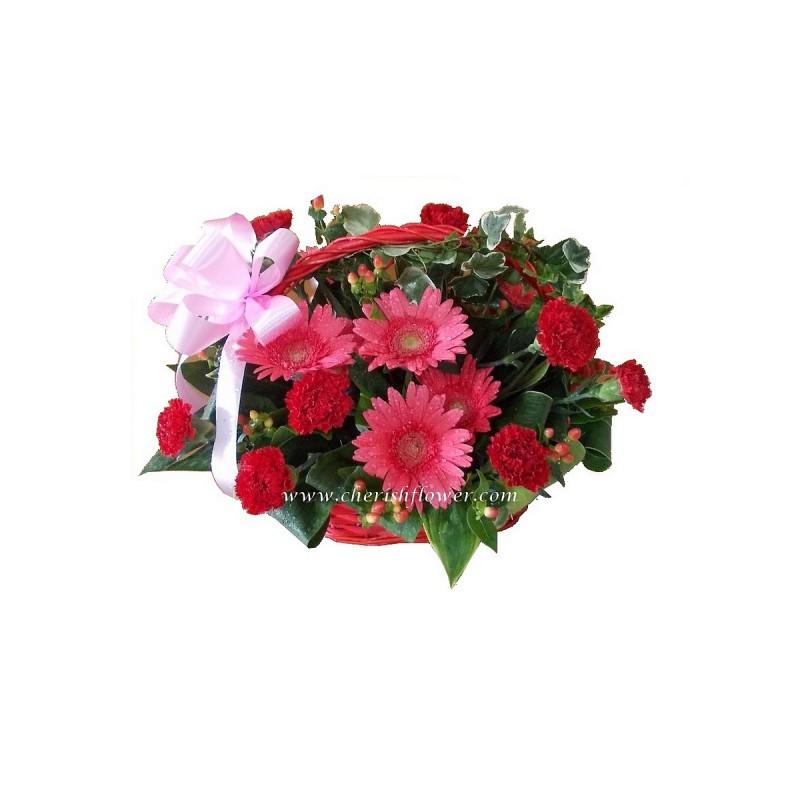 FA42 - Daisy & Carnation Arg